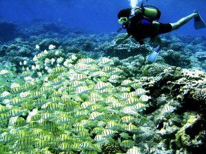 Arrecife coralino, isla de Bora Bora. Islas de la Sociedad. Polinesia Francesa